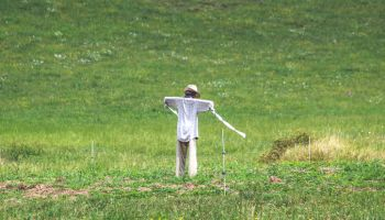 Scarecrow in the middle of a meadow